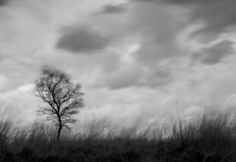 © Pieter de Vrijer